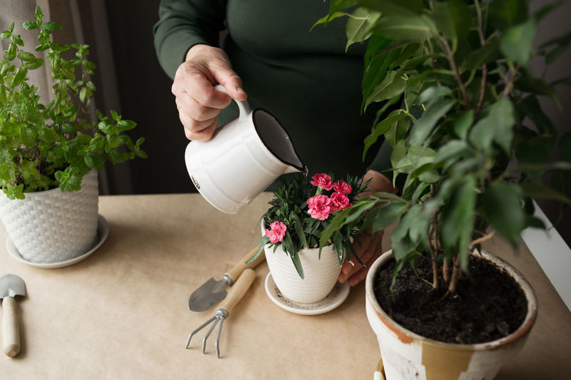 Midsection of woman watering plants on table at home