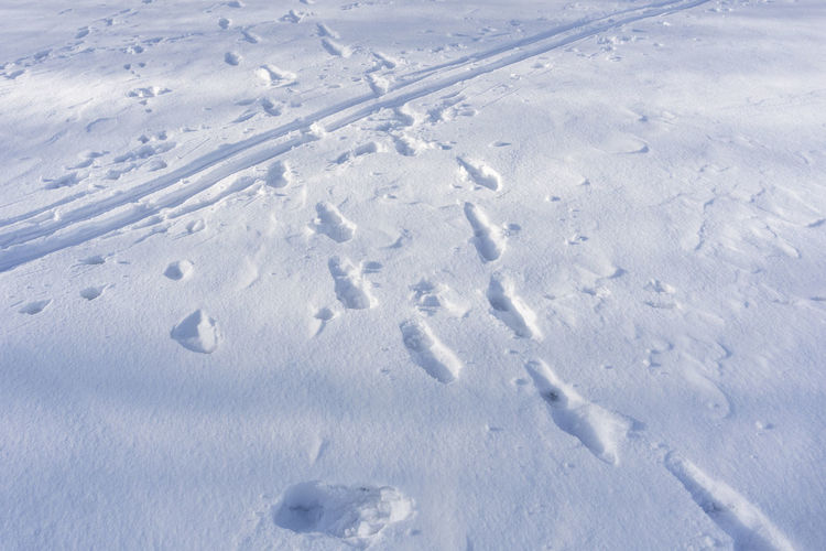 Footprints in the snow Winter Snow Covered Surface Cold White FootprintsBackground Traces Tracks Steps Nature Nobody No People
