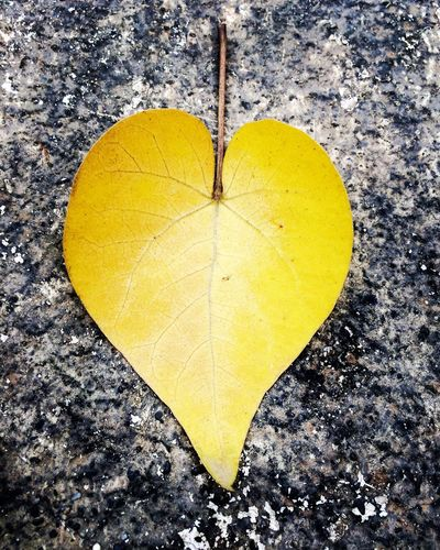 Nature's He💖rt Nature Nature_collection Nature Photography Natural Beauty Natureheart Heart ❤ Heart Heartbeat Moments Showcase July Check This Out Bestshot Bestoftheday Bestpic Bestphoto Bestpicoftheday Bestphotooftheday Ravi Ahlawat Leaf Leaf 🍂 Leafs Leafheart Leafs Photography IPhoneography