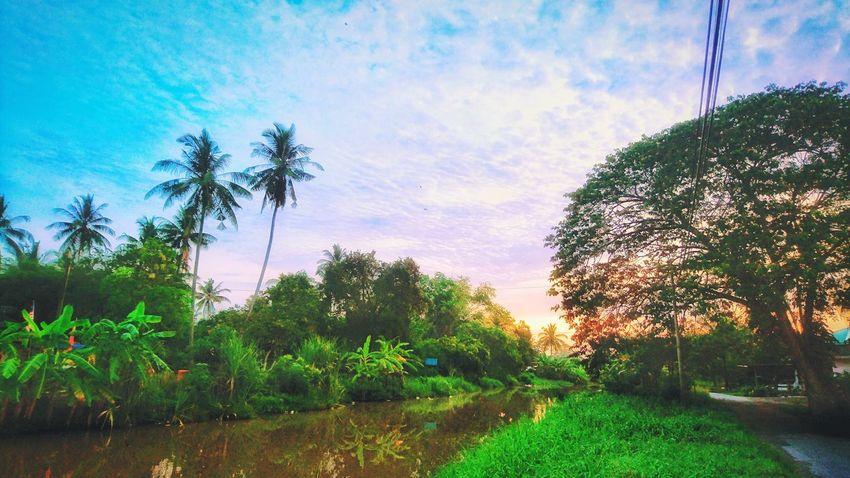 Tree Nature Outdoors At Alor Setar Malaysia