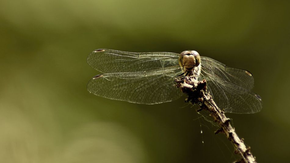 Dragonfly Animal Themes Animal Wing Close-up Dragonfly Focus On Foreground Insect No People Outdoors Selective Focus Wildlife
