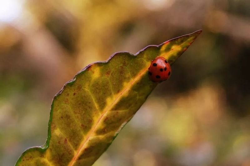 Hello guys, meet my ladybug. Taking Photos Check This Out Hello World Hanging Out