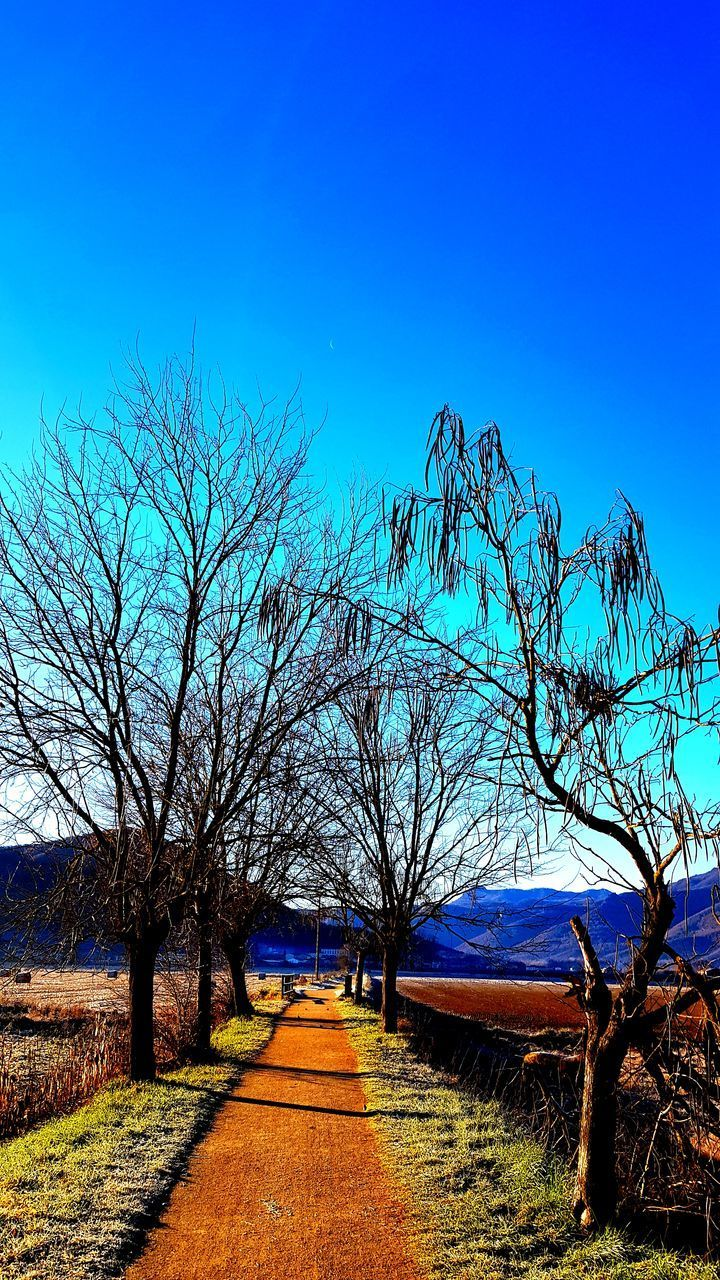 sky, tree, plant, the way forward, direction, nature, blue, tranquil scene, bare tree, tranquility, beauty in nature, no people, scenics - nature, clear sky, landscape, diminishing perspective, day, land, footpath, sunlight, outdoors, treelined