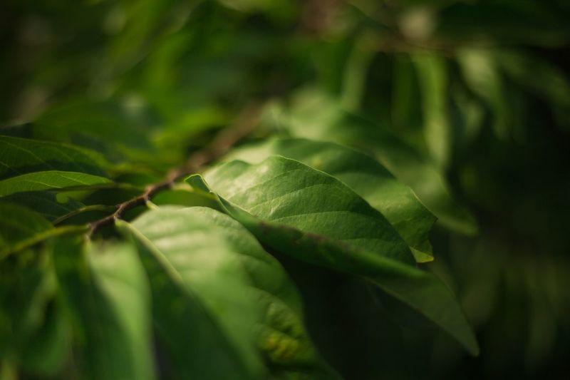 Ligh & Nature Nature Green Color Plant Tree Light Leaf Close-up