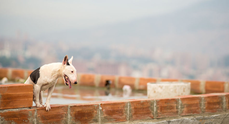 City Cityscape Colombia Lonely Medellín Security Service Stray Dog Waiting Animal Animal Themes Bricks Building Dog Guard Homeless Killer Melancholy Safety Urban Wild