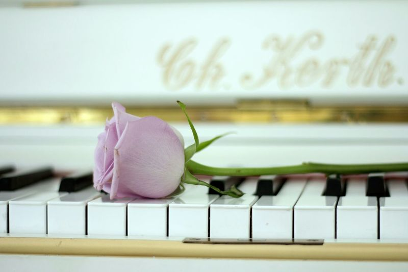 Music любимоедело Vorobeva_foto Vorobeva_yana ятаквижу нежнятина яжфотограф📷 черезмойобьектив хочуфотку Photographer Photoshoot Photooftheday Studio Photography Photography Saint Petersburg Close-up Flower Head In Bloom Pink Single Flower Cosmos Flower