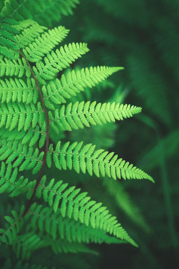 Full frame shot of fern leaf