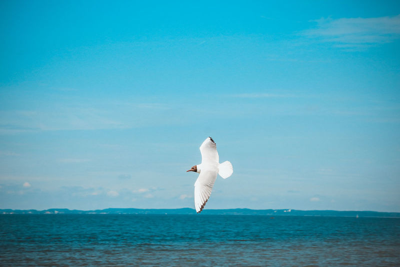 Bird Fliying Birds Fly Flying Flying Bird Sea Seagull Sky Sky And Clouds Water Waterfront Sommergefühle EyeEm Selects
