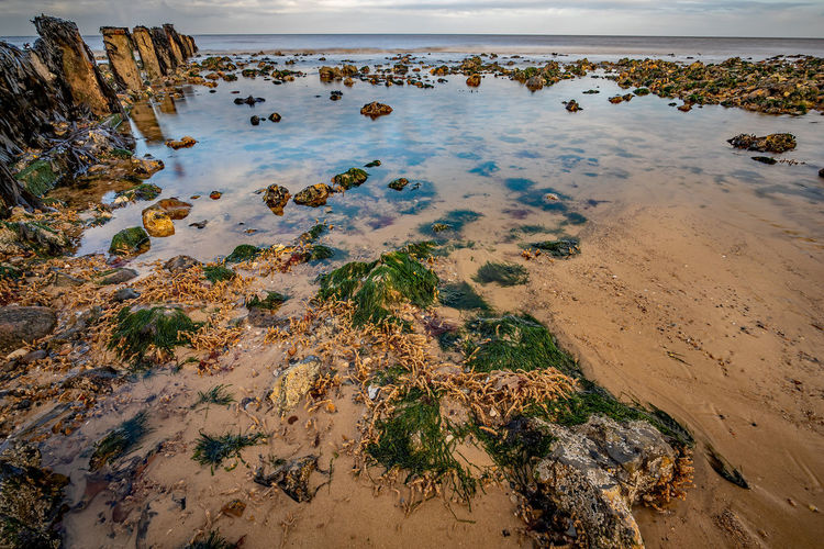 Rocks covered in seaweed in a shallow rockpool on a sandy beach on the norfolk coast
