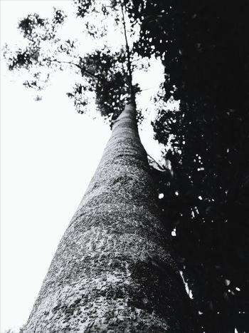 Monochrome Photography Black And White Sky Tree Nature No People TeamMalaysia Newtalent EyeEmMalaysia Eyeemcommunity Humanloverespect People Of EyeEm Young Adult Dramatic Angles
