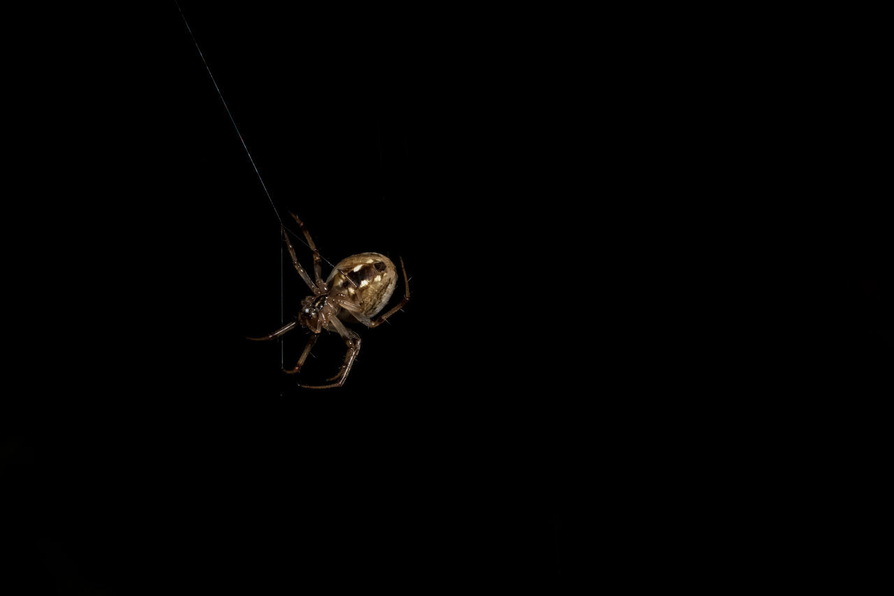 Close-Up Of Spider On Web Over Black Background