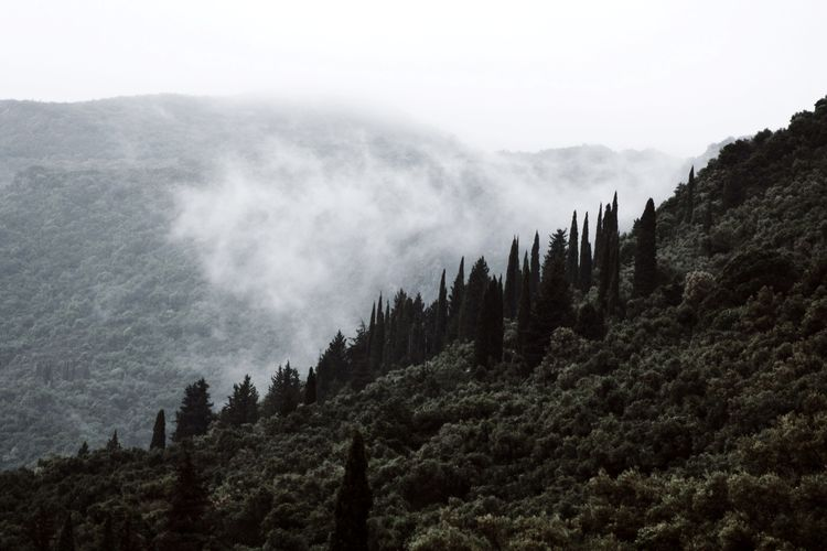 Foggy mood 🌬. Lost In The Landscape Landscape Landscape_Collection Nature Nature_collection Naturelovers Nature_perfection Foggy Tree No People Outdoors Mountain Fog Beauty In Nature Forest Simplicity Taking Photos EyeEm Selects Shootermag The Week On EyeEm EyeEm Best Shots