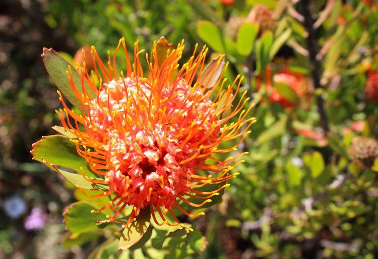 Flowerporn Flowers