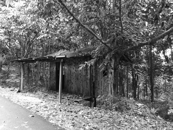 Tree Day Outdoors Built Structure No People Architecture Growth Nature Branch Abandoned Tropical Rainforest Monochrome HuaweiP9