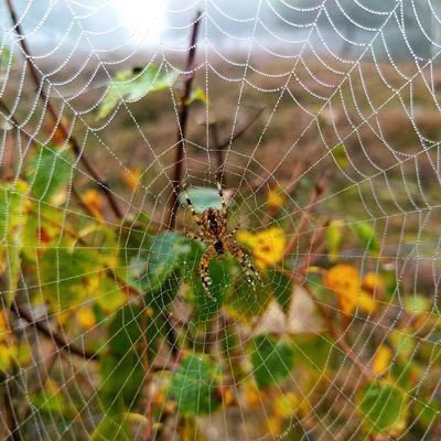 Spider Web Beauty In Nature