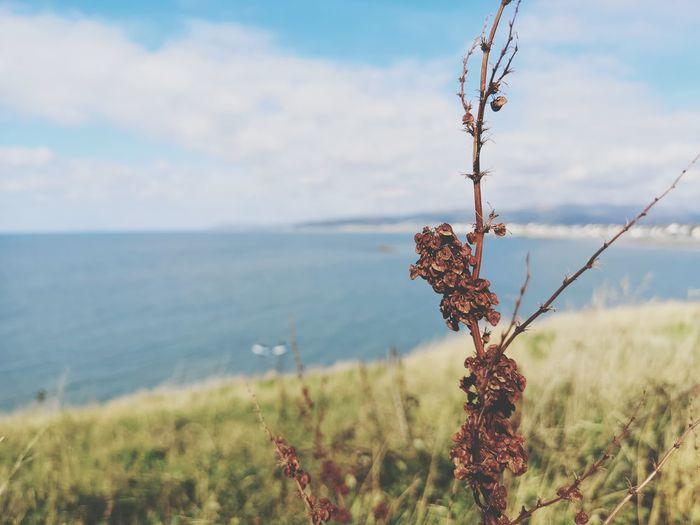 Summers gone Cliff Top View Focal Point Borth, Wales Borth Borth Beach EyeEm Selects Sea Sky Close-up Horizon Over Water Ocean Seascape Coast Beach Calm My Best Travel Photo Autumn Mood