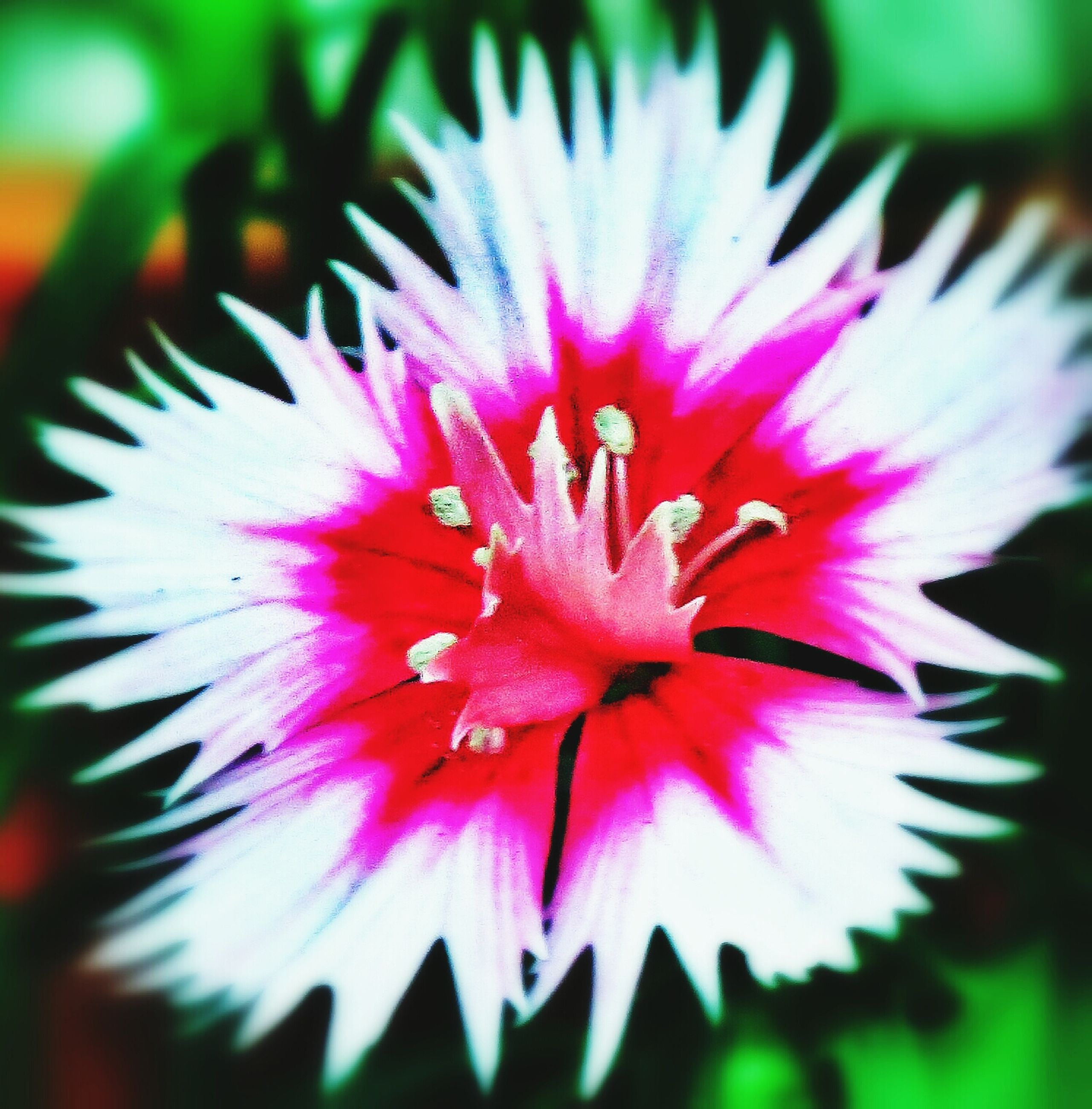 flower, petal, flower head, freshness, fragility, single flower, close-up, growth, beauty in nature, pollen, pink color, stamen, nature, blooming, focus on foreground, selective focus, plant, in bloom, no people, outdoors