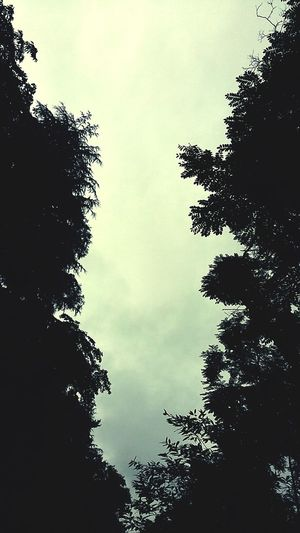 Jogging Trees And Sky Rainy Day Raining Season