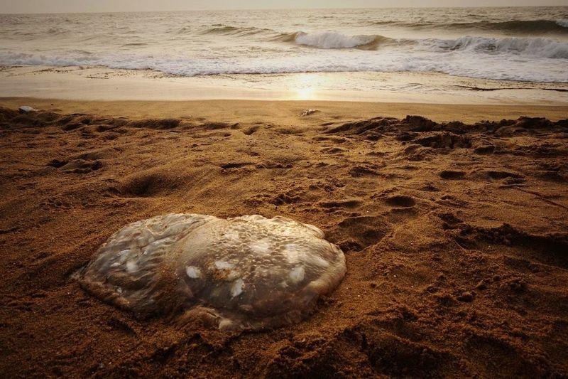 Sri Lanka Negombo Beach Sunset Jellyfish
