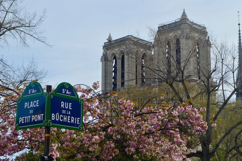 Notre drame Springtime Outdoors Tree Plant Text Architecture Communication Built Structure Building Exterior Sky Nature Sign Western Script Day Building Flower Place Of Worship Flowering Plant Religion Belief Growth No People Cherry Blossom Rue Street Streetphotography Travel Travel Destinations Paris Notre Dame De Paris Notre-Dame Architecture Architectural Column Architecture_collection Architectural Feature Spring Flower Head City Cityscape City Life My Best Photo