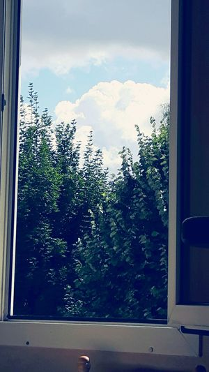 View From The Window... Blue Sky And White Clouds Sky And Clouds Green Color Top Of Trees Trees Trees And Sky Back To Home Nature Nature_collection Nature Photography Colour Of Life EyeEm Nature Lover EyeEm Best Shots EyeEm Gallery Eye4photography  Showcase August