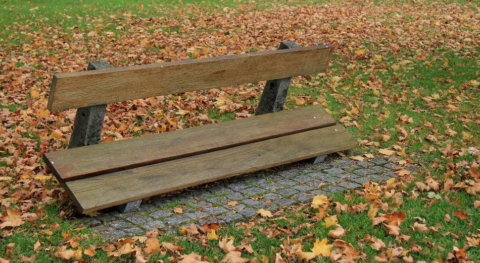 Bench on grassy field
