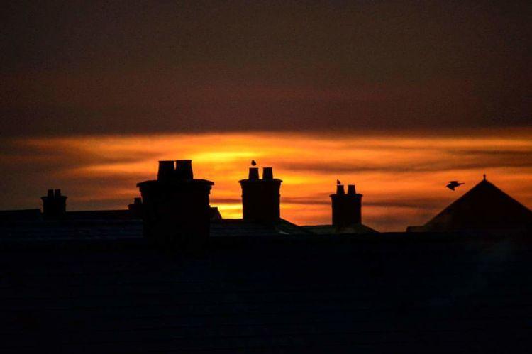 EyeEm Best Shots - Sunsets + Sunrise Sunrise Seagulls SunriseSunshine