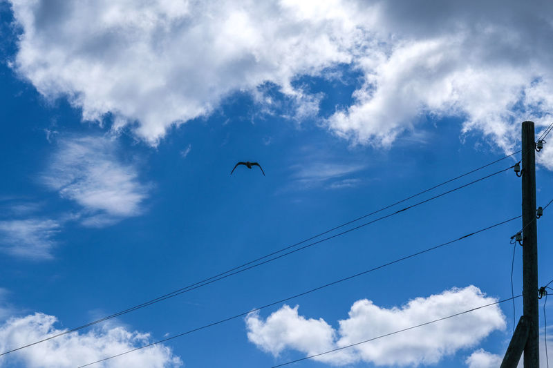 Cloud - Sky Low Angle View Sky Animal Wildlife Animal Themes Animals In The Wild Animal Bird Vertebrate Flying One Animal Cable Electricity  No People Power Line  Day Nature Outdoors Mid-air Blue Power Supply Telephone Line
