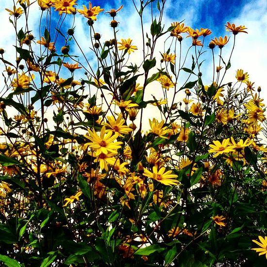 Freshness Flower Plant