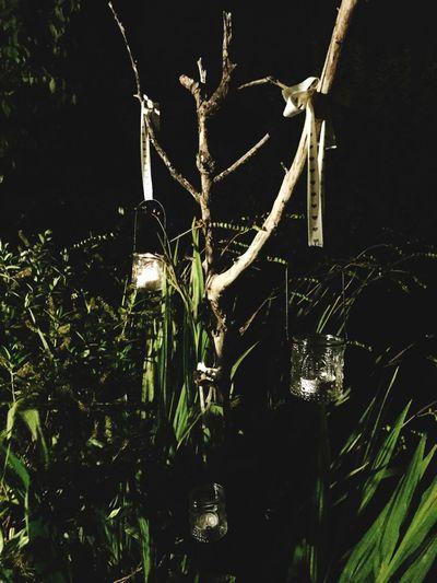 Tree of Light First Eyeem Photo Lights Tree