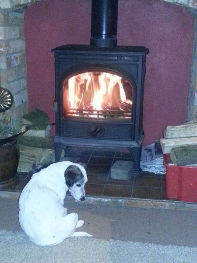 Spot Keeping Warm Log Fire Samsung Galaxy S3 Olney Buckinghamshire