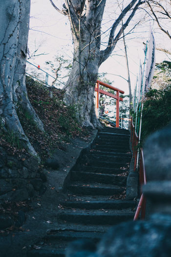 Staircase amidst trees in forest