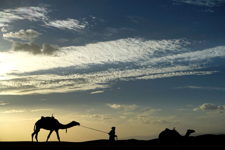 Silhouette people riding horses against sky during sunset