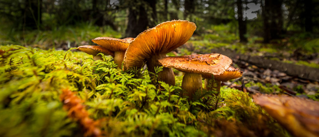 Mushrooms in the Autumn. Autumn Beauty In Nature Close-up Day Fall Forest Fragility Freshness Fungus Growth Leaf Moss Mushroom Nature No People On The Ground Outdoors Plant Tranquility Tree Wilderness Perspectives On Nature