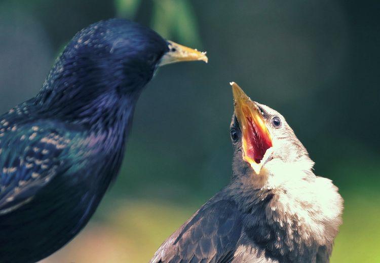 Close-up of bird feeding young animal outdoors