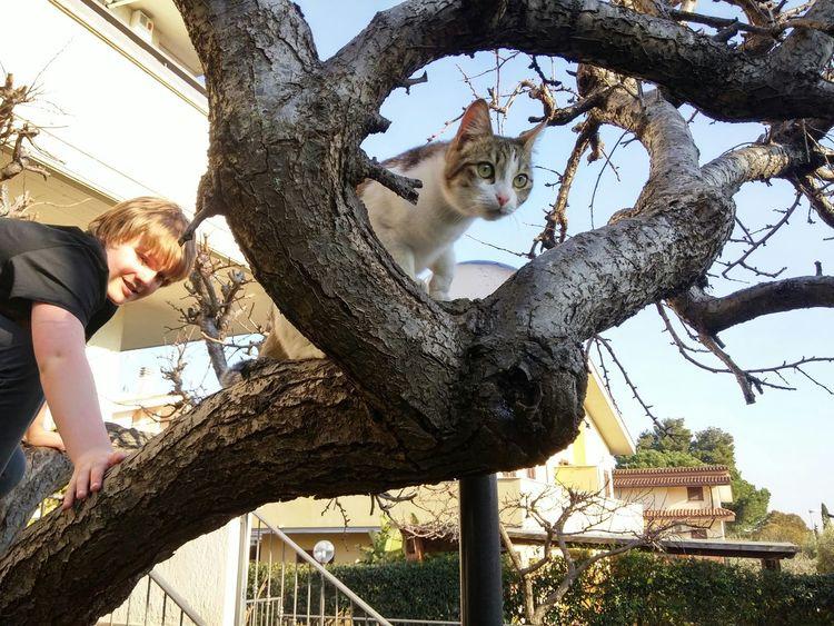 Non riesco a saltare Hugging A Tree