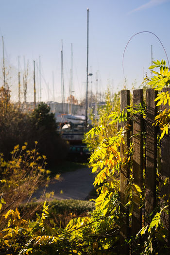 Plant Sky Nature Architecture Yellow No People Day Growth Built Structure Building Exterior Focus On Foreground Outdoors Water Clear Sky City Transportation Beauty In Nature Tree Building Sailboat