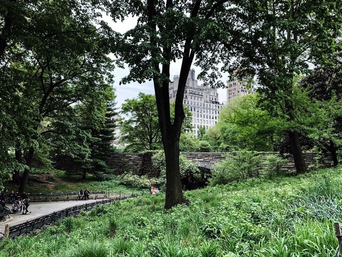 Central Park Central Park - NYC New York Plant Growth Green Color Nature Built Structure Outdoors Park City Tree