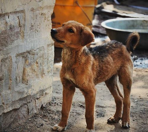 """Dogs do speak, but only to those who know how to listen.""~ My Name is Red 🐕[1] Bishnoi Jodhpur Rajasthan India Igersnavimumbai Phodus_competition Itz_mumbai _soimumbai _soi Soiwalks Mumbai_uncensored Ig_india Indianphotography Indianphotographyclub Desi_dairies Storiesofindia Canon EOS700D Pixelpanda_india Photographers_crews Canon_photos Pw_mumbai Pw_featured Somumbai Myhallaphoto inspirioindia iiframe @instagram"