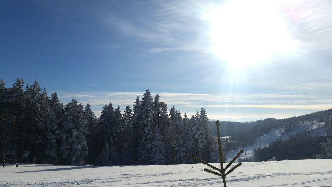 Winter Tranquility Snow Tree Scenics Sunlight Cold Temperature Tranquil Scene Beauty In Nature Nature Day Landscape Outdoors Pinaceae No People Sky Mountain Range
