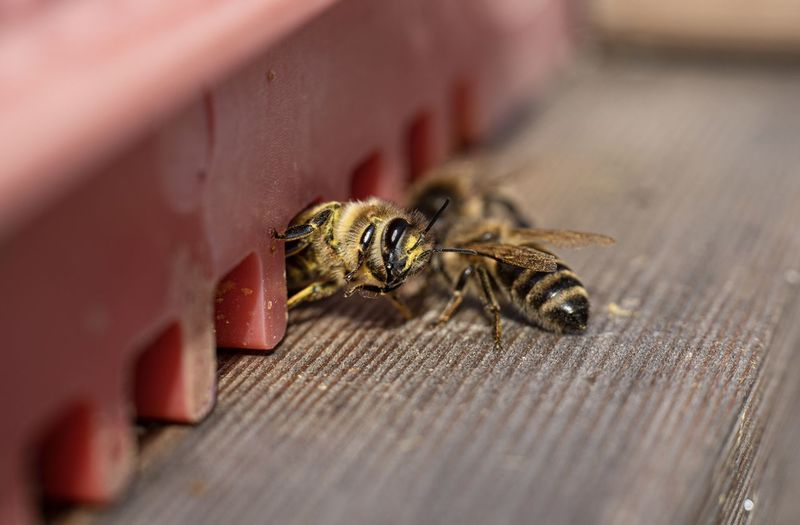 Close-up of bee on table