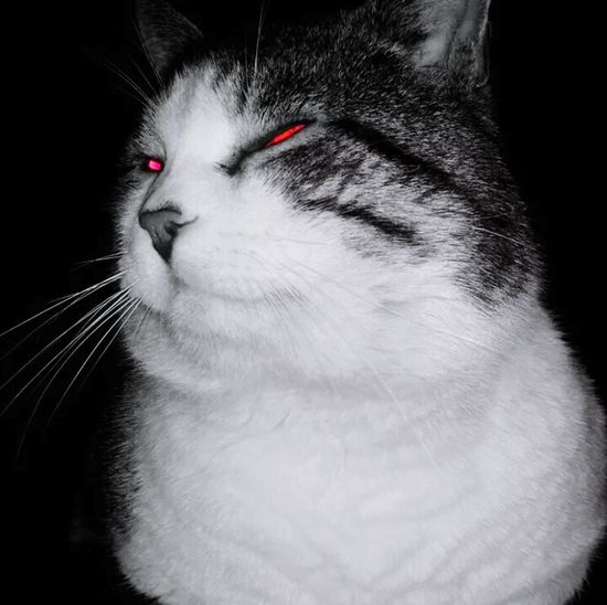 Micio Saccottino Evil Xperia S