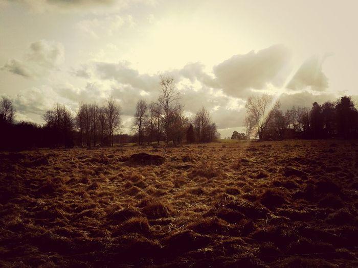 EyeEm Nature Lover Hugging A Tree Landscape_Collection Sweden