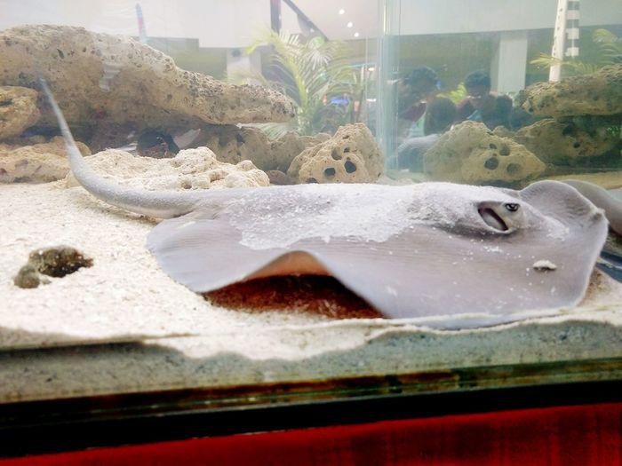 Tanklife Marine Biology Marinelife Stingray Eyeemaquatic Life Eyeemphotography