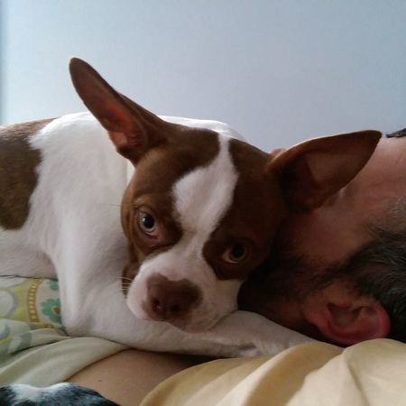 Dog Fergus Boston Terrier love Protective