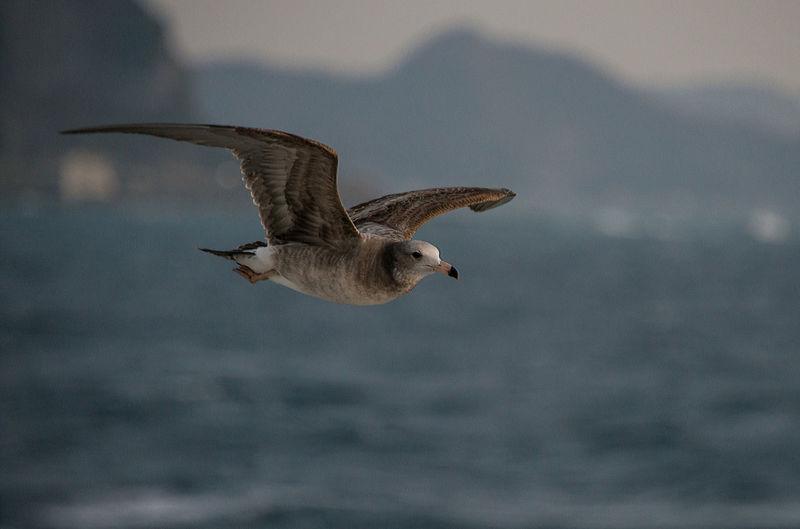 Animal Bird Bird Photography Birds_collection Nature Sea Sea And Bird Water_collection