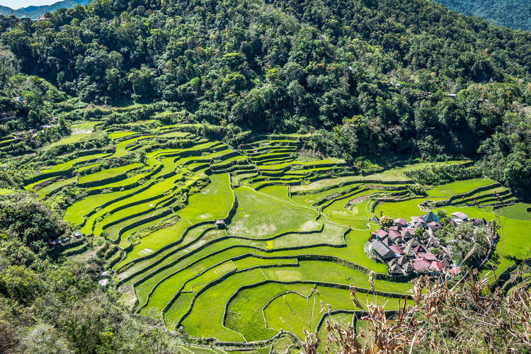 Plant Tree Green Color Growth Landscape Beauty In Nature Scenics - Nature Agriculture Rural Scene Environment Field Nature Tranquility Tranquil Scene Land Terraced Field Day Terrace No People Rice - Cereal Plant Outdoors Gardening