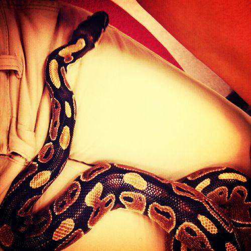 My Snake BOB :)