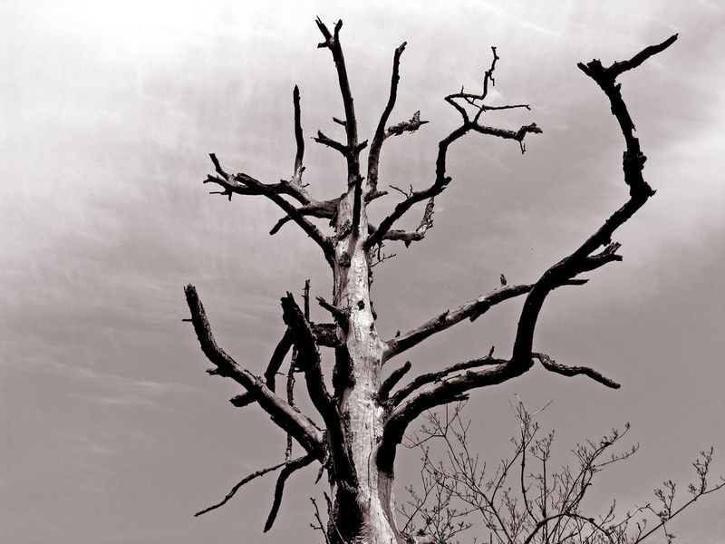 Darkness Death Desert Drought Nature Weather Acid Rain Age Bare Tree Black And White Climate Climate Change Dead Tree Depression Dry Dryness Ecology Environment Forest Nature Old Sadness Sky Tree Tree Trunk