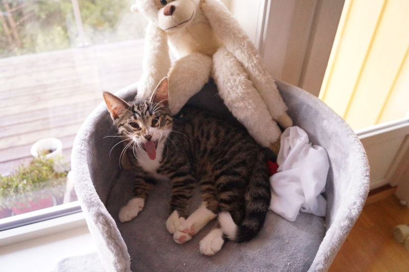 Cat sitting on kitten at home